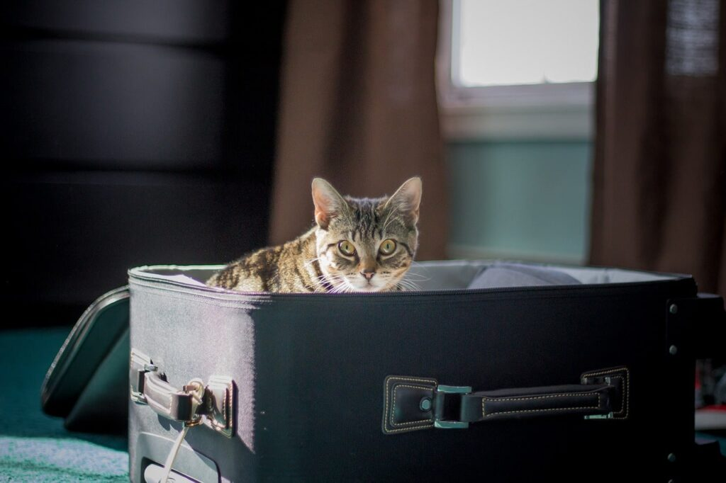Moving Your Pet to a New Address